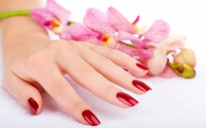 Woman hand with pink orchid